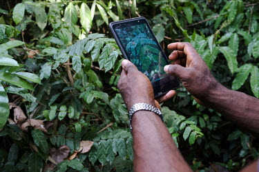 Using an Android tablet and mobile app to record plant biodiversity in a small sacred forest grove near the village of Dekanme along the Oueme River.  What was once a forest has dwindled to a grove of...
