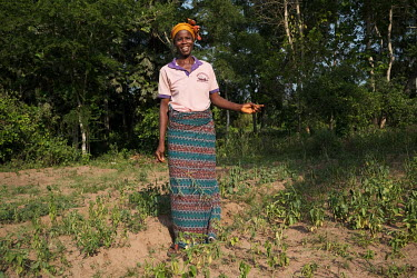 Helene Tovitounhlan (40), standing in a bed of forest plants used in traditional healing in the village of Kotan. The forest garden is an initiative of the NGO GRABE Benin, (Groupe de Recherche et d'A...