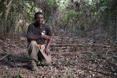 Yaya Chabi Ota, an eco-guard in the sacred forest he protects in Kikele. The forest is home to approximately 30 white-thighed colobus monkeys (Colobus vellerosus), one of the last remaining population...