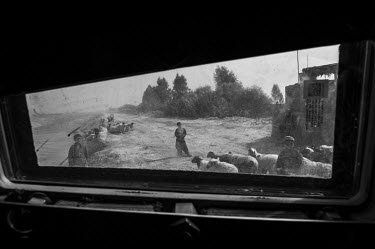 Boys and their flock of sheep are seen through the window of a US military vehicle.