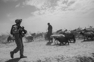 A US Marine conducts a security patrol, passing through a flock of sheep, in Helmand Province.