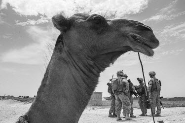 A camel in the foreground, with a group of US Marines.