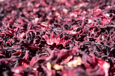 Dried hibiscus flowers used to make one of the country's national drinks, bissap.