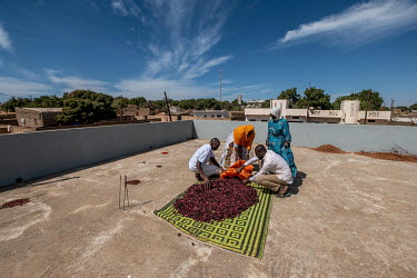 Men scoop dried hibiscus flowers into a sack on a roof top in the village of Keur Matar Gueye. The flowers will be used to make bissap tea, a popular local infusion.