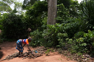 Sessouhouede Anagonou, who estimates her age at 67, collecting fallen wood for her cooking fire in a degraded sacred forest grove in the village of Agonme. The grove is now being protected following a...
