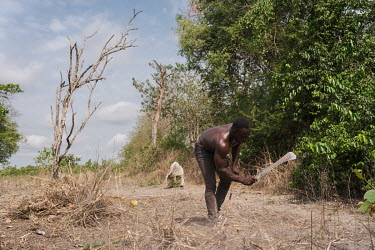 Aboudou Wassiou Dramane (23) clearing land for crops on the edge of a sacred forest in Kikele. The forest is home to approximately 30 white-thighed colobus monkeys (Colobus vellerosus), one of the las...
