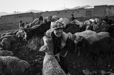 A man prepares sheep to sell in a market ahead of the feast of Eid al-Adha.