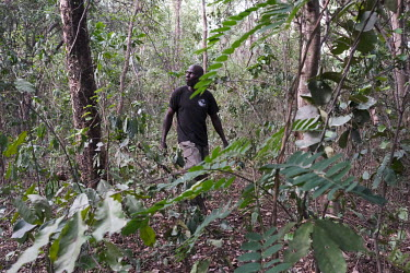 Abdou Dramane (52), a former hunter and now an eco-guard in the sacred forest he protects in Kikele. The forest is home to approximately 30 white-thighed colobus monkeys (Colobus vellerosus), one of t...