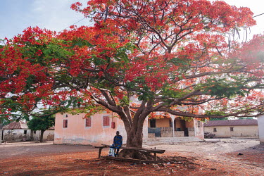 An elderly gentleman resting under a flamboyant tree in the village of Nagayile.