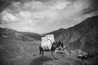 A donkey is used to transport ballot materials to a remote polling booth.