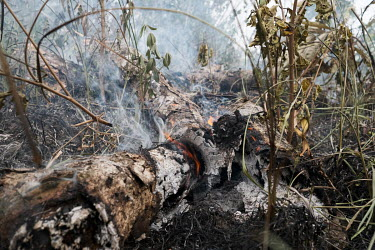Brush being burned to clear land for crops near Bassila. Over 90 percent of the nation's households are dependent on wood or charcoal for cooking. Together with one of the world's highest population g...