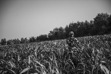 A US Marine conducts a patrol through a field of crops.