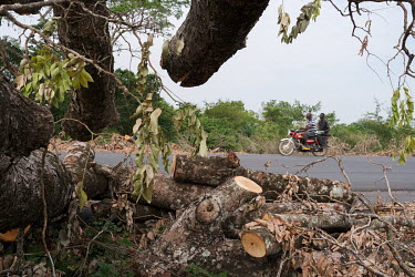 A felled tree beside a highway near Bassila. Over 90 percent of the nation's households are dependent on wood or charcoal for cooking. Together with one of the world's highest population growth rates...