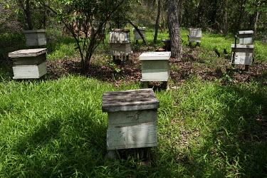 Beehives in a clearing in the Tobe protected forest. Some 350 hectares in area, the forest had been severely degraded by agriculture. Over the last 35 years it has been restored thanks to a partnershi...