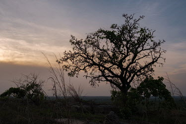 A tree silhouetted against the sky on a rock outcrop in the Tobe protected forest. Some 350 hectares in area, the forest had been severely degraded by agriculture. Over the last 35 years it has been r...