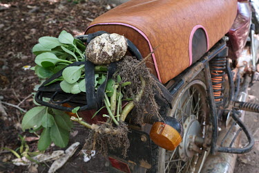 Forest plants on the back of a traditional healer's motorcycle in the Tobe protected forest. Some 350 hectares in area, the forest had been severely degraded by agriculture. Over the last 35 years it...