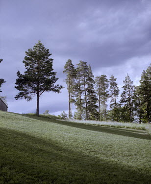 'The hill', the ground where people would gather for meetings, political speeches and concerts during the summer camp. One person was killed here by Anders Behring Breivik on 22 July 2011.