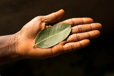 Gwogwoyi (as it is called in the Gbagyi language) is a leaf. It is used for mental health issues and 'night people' (those affected by witchcraft) by the Dr Amina Aliyu Shekwonya Herbal Centre.