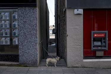 A dog waits for its owner on Lerwick's main shopping street. With a population of around 7,000, Lerwick is the biggest town in the Shetland Islands which have a total population of around 22,000. In 2...