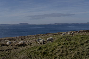 Sheep graze on a hill overlooking Scapa Flow. Protected by the surrounding islands, Scapa Flow is a harbour that has an area of 324.5 square kilometres. Some believe that as climate change allows ship...