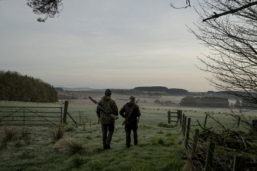 Kenny Horne (right), head Gamekeeper at the Teasses estate in Fife goes out in the early morning with his assistant Jordan to control foxes and deer. The Teasses Estate covers 1,100 acres, it organise...