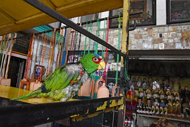 A pet parrot perched on a stall selling drug cartel related souvenirs.