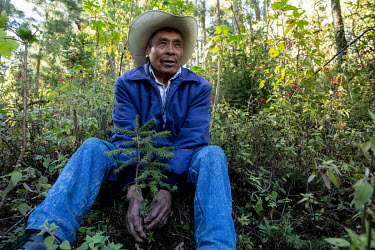 Marcello Valdes Martinez sits among the undergrowth in the Sierra Chincua monarch butterfly reserve.