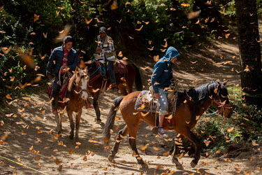 People on horses riding through a forest alive with monarch butterflies. Every year, from January to the end of March, millions of monarch butterflies make a 4000 kilometre migration to breed in El Ro...