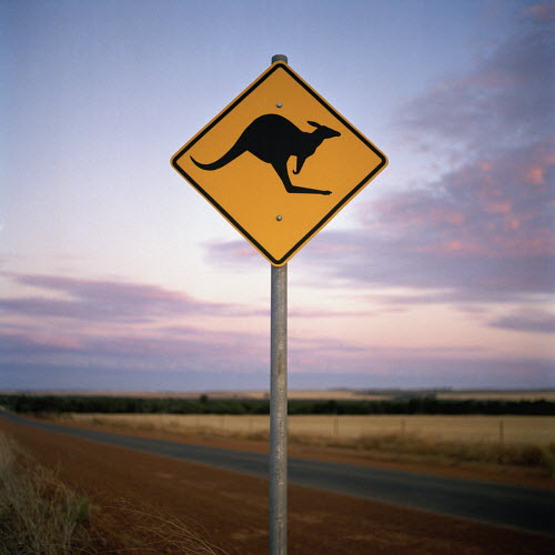 The taming of the roo