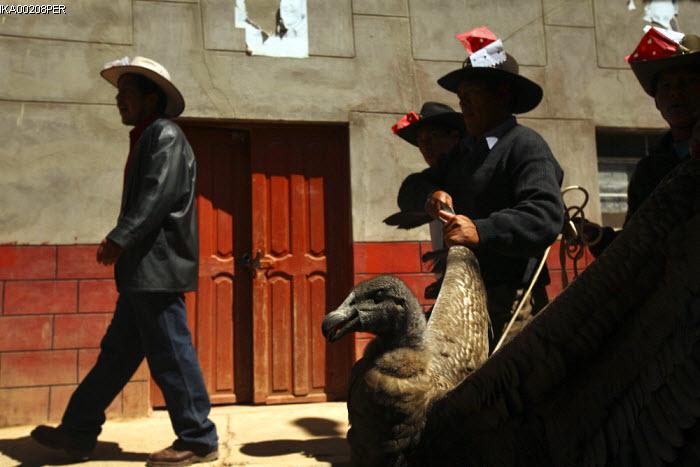 Condor vs. Bull