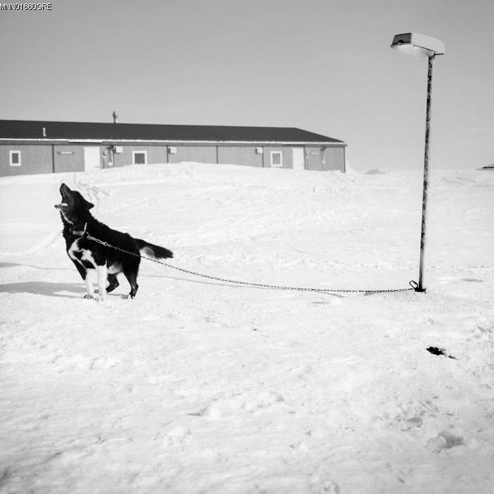 Guarding Greenland