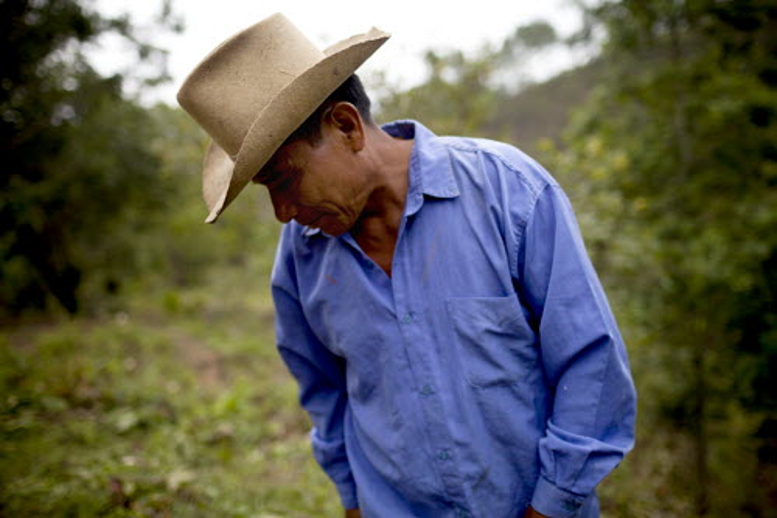 Guatemala's Green Hunger