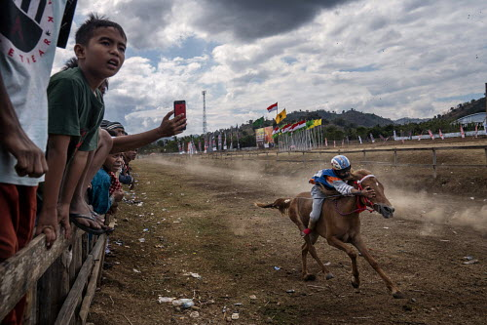 Child Jockeys in Sumbawa